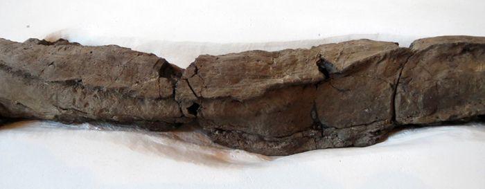 Abb. 8: Sehr gut lassen sich die Kanten der Bretter erkennen, die mit dem Klebstoff überfangen wurden. © Landesamt für Denkmalpflege und Archäologie Sachsen-Anhalt, Maral Schumann.