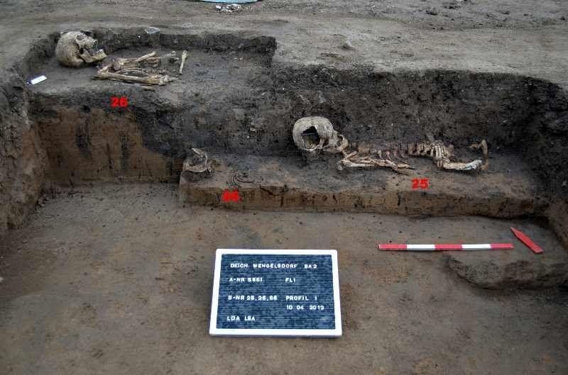 Abb. 1: Die Skelette waren teilweise durch den Pflug gestört und disloziert. © Landesamt für Denkmalpflege und Archäologie Sachsen-Anhalt, Jörg Frase.