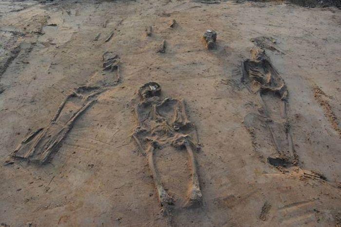 Abb. 9: Übersicht über einige verhältnismäßig schlecht erhaltene Skelette. Die Grabgruben waren in diesem Bereich kaum erkennbar. © Landesamt für Denkmalpflege und Archäologie Sachsen-Anhalt.