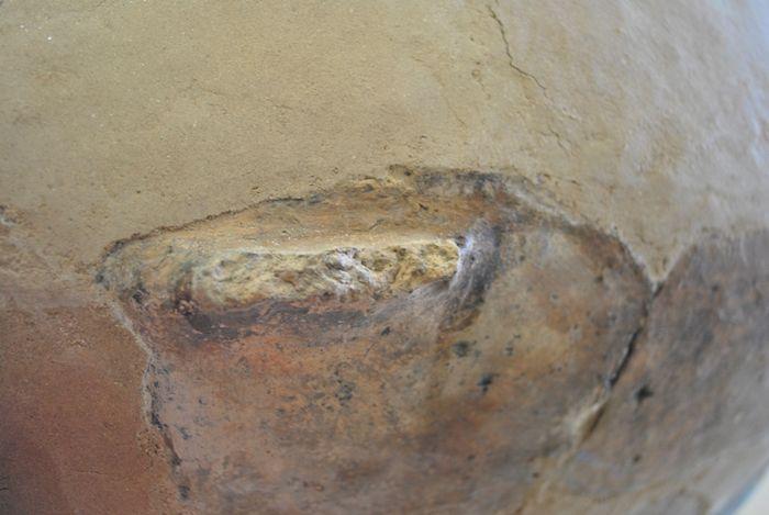 Abb. 3b: Libehna, Fundstelle 8. Detailfotos der Amphore: beschädigter Ösenhenkel. © Landesamt für Denkmalpflege und Archäologie Sachsen-Anhalt, Andrea Moser.
