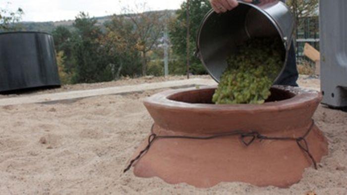 Abb. 10: Eingegrabene Amphore. Eingefüllt werden Trauben, in diesem Fall der Rebsorte Riesling. © dpa.
