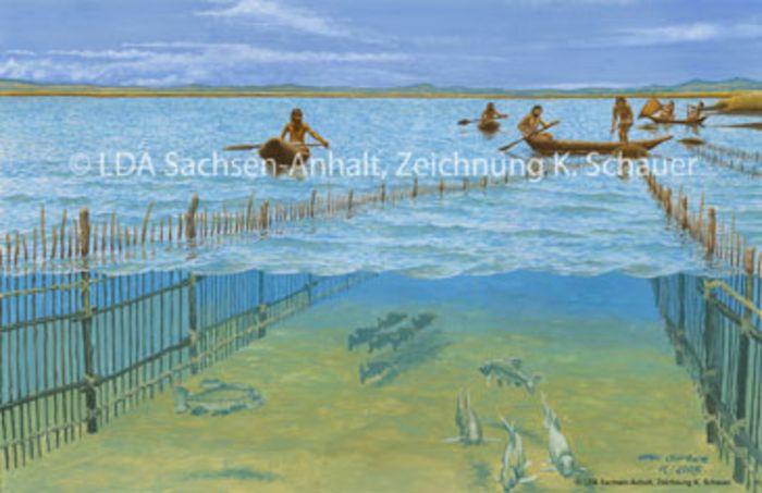 Abb. 12: Fischfang mit Fischzäunen (Rekonstruktionsvorschlag).  © Landesamt für Denkmalpflege und Archäologie Sachsen-Anhalt, Karol Schauer.