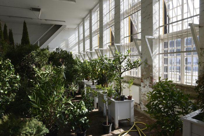 Abb. 2: Zitruspflanzen im Winterquartier in einer der Orangerien. © Landesamt für Denkmalpflege und Archäologie Sachsen-Anhalt, Gunnar Preuß.