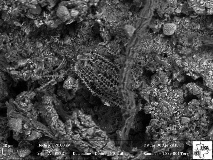 Abb. 5: Verschiedene Ansichten der unter dem Rasterelektronenmikroskop dokumentierten Phytolithe. Abbildung 5 zeigt Phytolithe außerhalb des Gefäßes zwischen den Ösenhalsringen.  © Landesamt für Denkmalpflege und Archäologie Sachsen-Anhalt, Uwe Schwarzer.