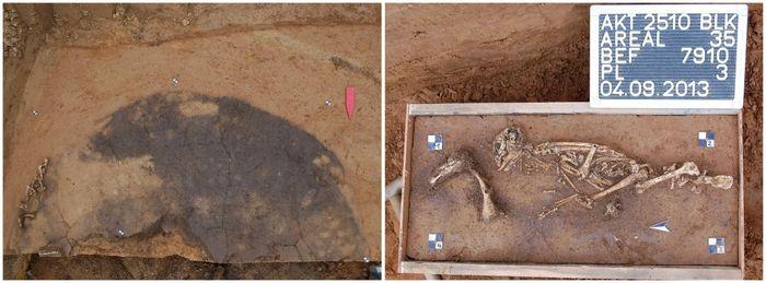 Abb. 3: Im Profener Grab lag der Hase seitlich am Grubenrand, die menschliche Bestattung zentral. Im Fußbereich deponierte man eine Kanne und ein weiteres Gefäß. © Landesamt für Denkmalpflege und Archäologie Sachsen-Anhalt.