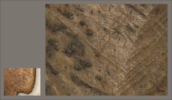 Abb. 6: Besonders am proximalen Ende am Übergang von der Zahnreihe zum Gerätenacken sind bei 100facher Vergrößerung neben ganz feinen Kratzern auch breitere Rillen bzw. Riefen zu sehen, die kreuz und quer in verschiedene Richtungen verlaufen. Silska 2012, 187 Abb. 111, 3 (links); Grjaznov 1956, 45f., Taf. 15,42 (rechts).