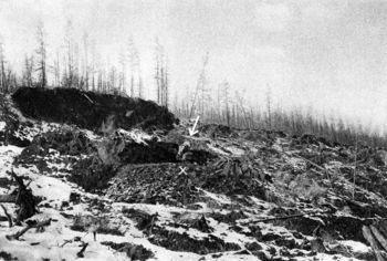 Abb. 4: Lage des Mammutkadavers (siehe Pfeil) im Abbruchfeld nahe des Flussufers. Pfizenmayer 1926, 121.