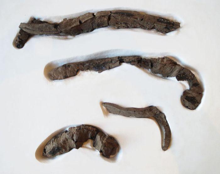 Abb. 6: Ein Teil der restaurierten Birkenpechstücke, geschützt in einem Gipsbett. © Landesamt für Denkmalpflege und Archäologie Sachsen-Anhalt, Maral Schumann.