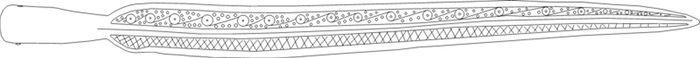 Abb. 13: Zeichnung der Lanzenspitze: »aufgefaltet« mit ergänztem Muster. © Landesamt für Denkmalpflege und Archäologie Sachsen-Anhalt, Vera Keil.