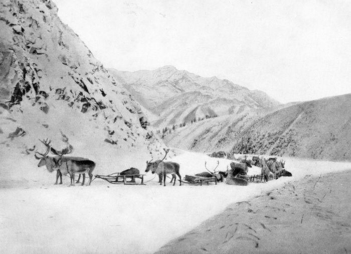 Abb. 6: Mammuttransport mit Rentierschlitten im Tas-Haiach-Tach-Gebirge. Pfizenmayer 1926, 193.