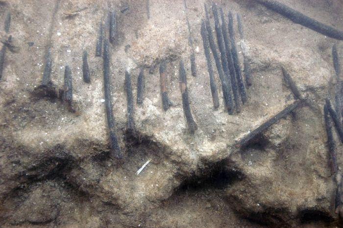 Abb. 9: Detailaufnahme des Fischzauns. Am Stammende ausgerissene Haselruten. © Landesamt für Denkmalpflege und Archäologie Sachsen-Anhalt, Harald Lübke.