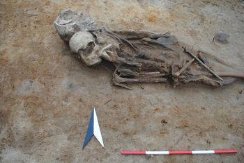 Abb. 19: Zwei direkt übereinander bestattete Individuen. © Landesamt für Denkmalpflege und Archäologie Sachsen-Anhalt, Dorothee Menke.