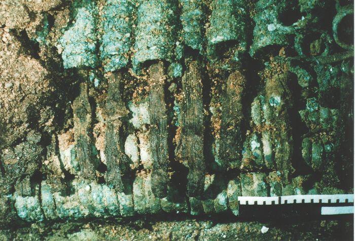 Abb. 4: Faserreste, die aus den Enden der Spiralröllchen herausragen. © Landesamt für Denkmalpflege und Archäologie Sachsen-Anhalt.