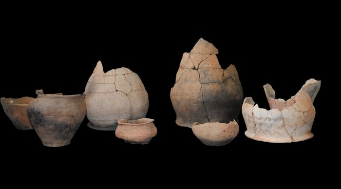 Abb. 11: Ein Teil des keramischen Inventars aus dem Grubenhaus 134. Zahlreiche Scherben wurden im Bereich der Herdstelle aufgefunden. © Landesamt für Denkmalpflege und Archäologie Sachsen-Anhalt, Dovydas Jurkėnas.