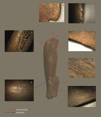 Abb. 5: Gebrauchsspuren unterm Mikroskop: Mikro-fotografisch dokumentierte Arbeitskanten bei 20- bis 200- facher Vergrößerung: a- 30fache, b- 20fache, c- 20fache, d- 200fache, e- 30fache, f- 20fache, g- 20fache. Es lassen sich erwartungsgemäß viele verschiedene Arten von Spuren differenzieren, die sowohl vom Herstellungsprozess als auch von der Verwendung stammen. © Landesamt für Denkmalpflege und Archäologie Sachsen-Anhalt, Frederike Hertel.