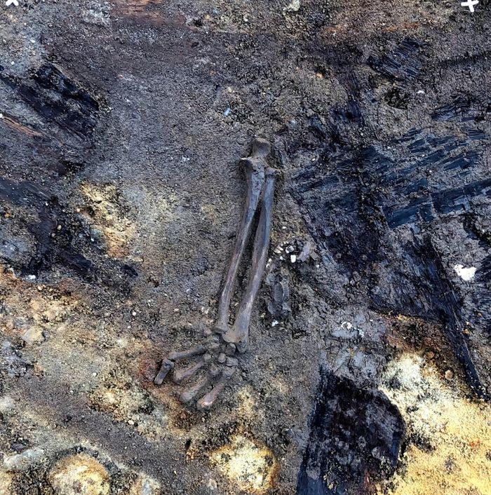 Abb. 4: Freigelegte Hand und Arm. Die Knochen liegen noch im anatomischen Verband. Dies belegt, die noch nicht vollständige Skelettierung der Leiche als die Gruft geplündert wurde. © Landesamt für Denkmalpflege und Archäologie Sachsen-Anhalt.