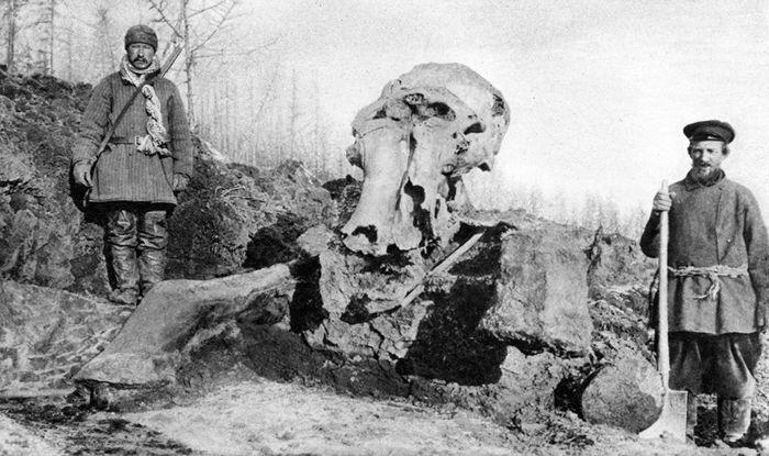 Abb. 5: Beresowka-Mammut zu Beginn der Ausgrabungen. Links der Kosake Jawlowsky, der den Mammutfund an die Behörden gemeldet hat. Pfizenmayer 1926, 129.