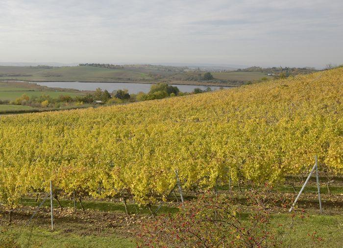 Abb. 1: Blick über einen Teil des Saale-Unstrut-Weinbaugebiets. © Landesamt für Denkmalpflege und Archäologie Sachsen-Anhalt, Gunnar Preuß.